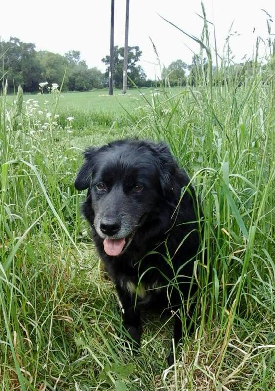 Dog Walker in Stamford, Lincolnshire